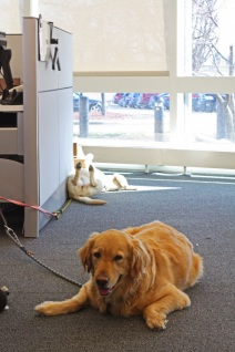 dogs in office