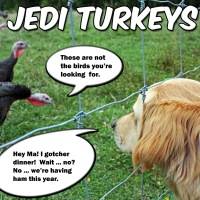 Jedi Turkeys